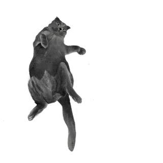 Bruno the Cat