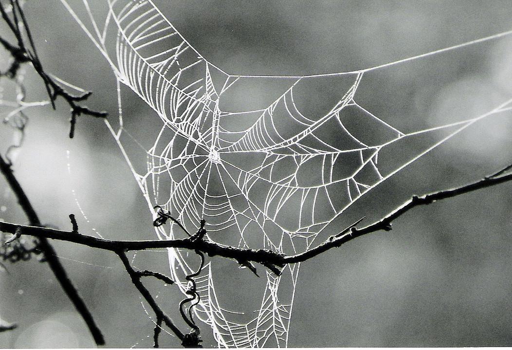 Nature's Asymmetry