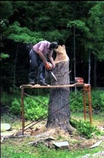 stump 1b.jpg