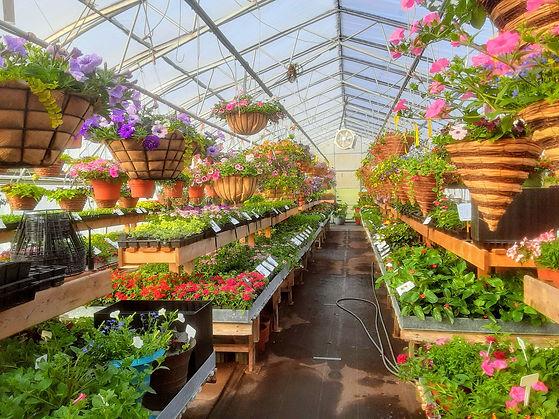 Arthur Greenhouses seed vendor.jpg