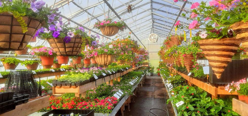 Arthur Greenhouses