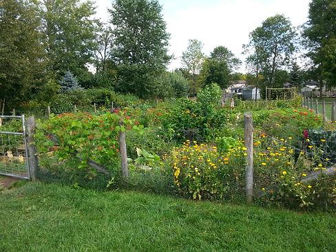 Guelph Community Gardens Program.jpg