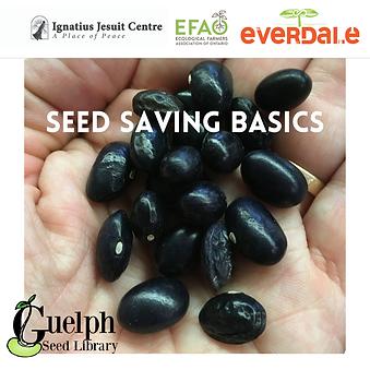Seed saving basics online workshop.png