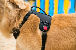 Heavy Duty Patented Metal Buckle Dog Harness Manufacturer - closeup