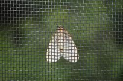 Design-3d-Wings-Green-Screen-Bug-Light-Moth-2425906