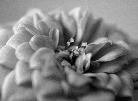 A beleza da macrofotografia