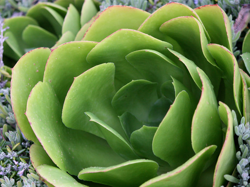 The Different Types of Plant Structures and Functions
