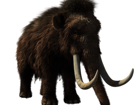 The Wooly Mammoth and De-extinction