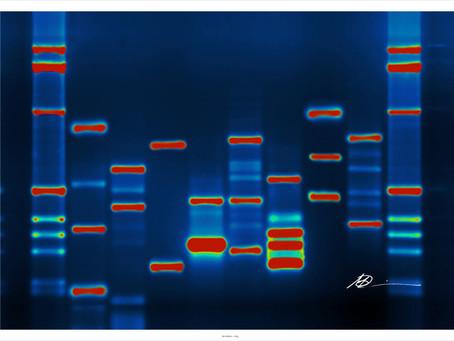 The Evolution of DNA Fingerprinting