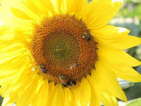 Why Fibonacci Numbers Show Up in Plants