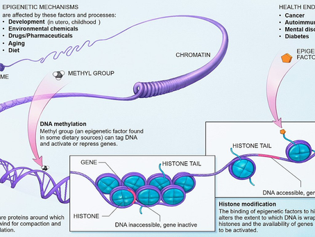 Epigenetic Processes in Carcinogenesis