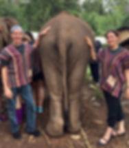 Thailand Elephant David & Misty