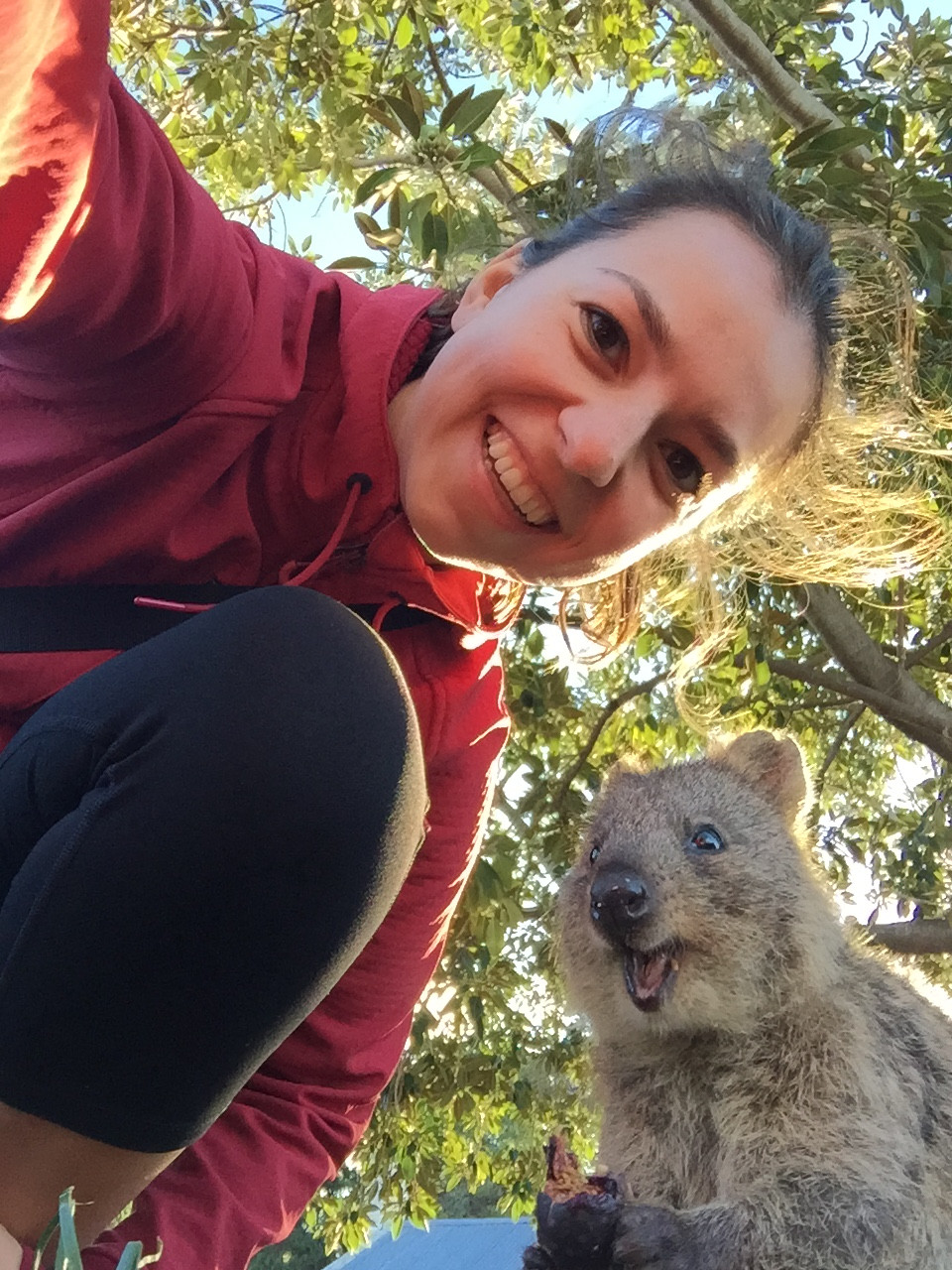 Selfie with a quokka