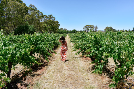 Taking a stroll through the Barossa Valley vineyards