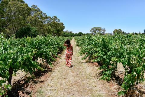 Taking a stroll through the Barossa Valley vineyards