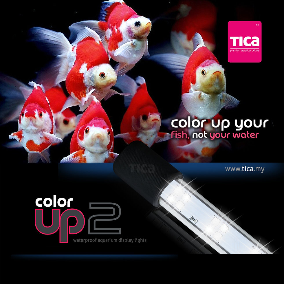 Color-Up-2_gold-fish_2.jpg
