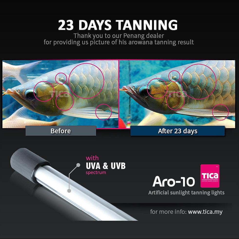 23-days-KB-Aquarium-_1000x1000.jpg