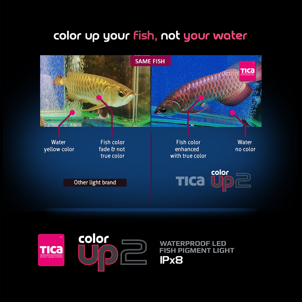 Color-Up-2_-your-fish,-not-your-water_2_