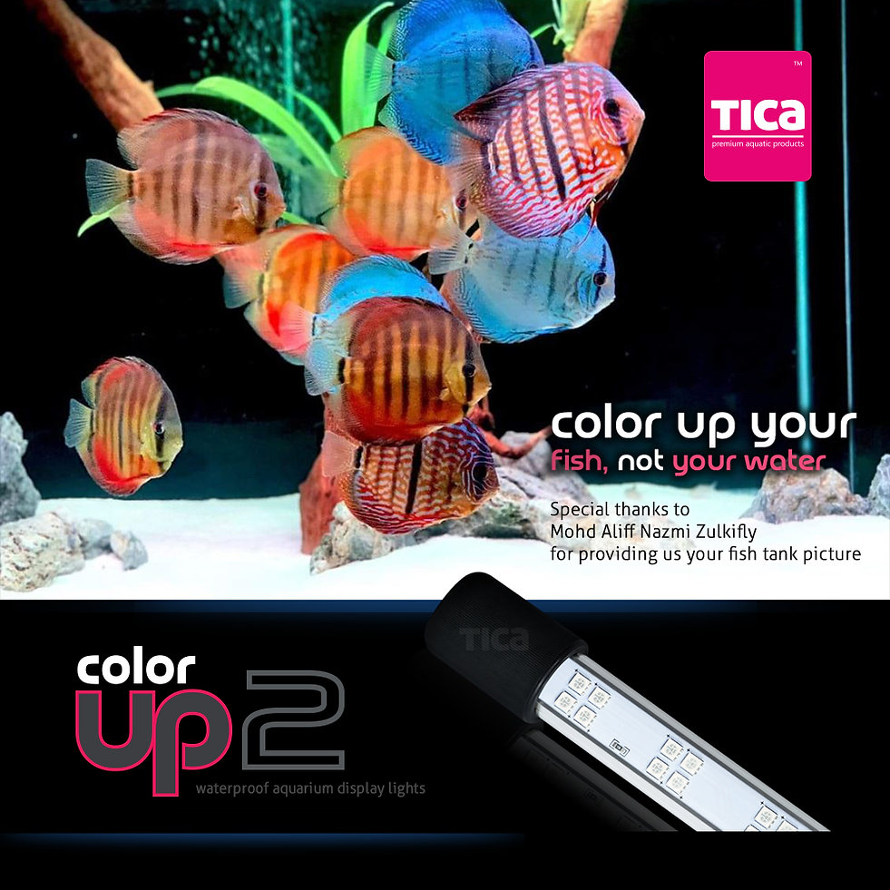 Color-Up-your-fish,-not-your-water_1000x