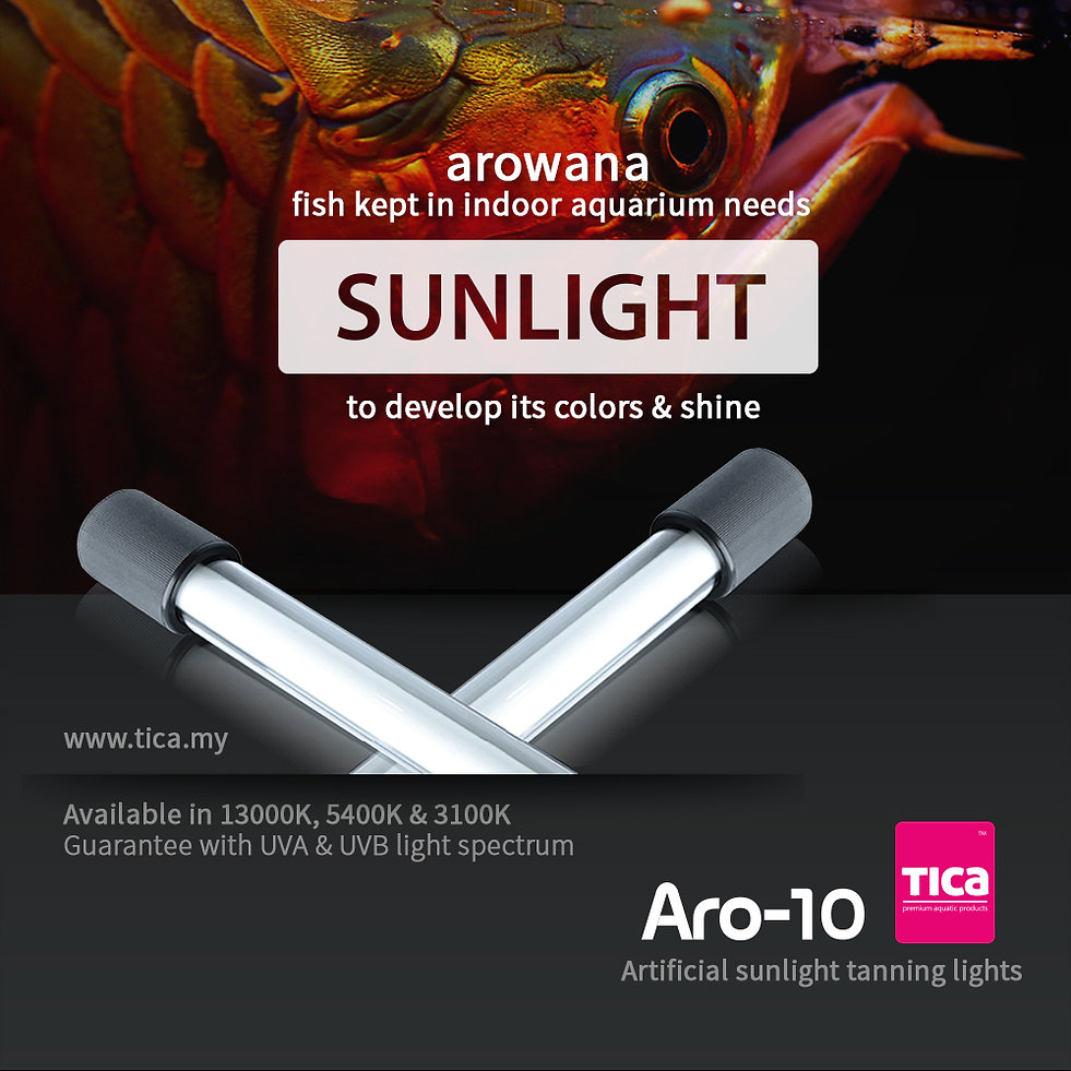 Sunlight_1000x1000.jpg
