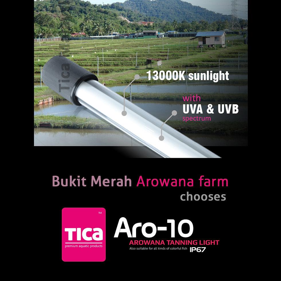Aro-10_8_watermark_1000x1000.jpg