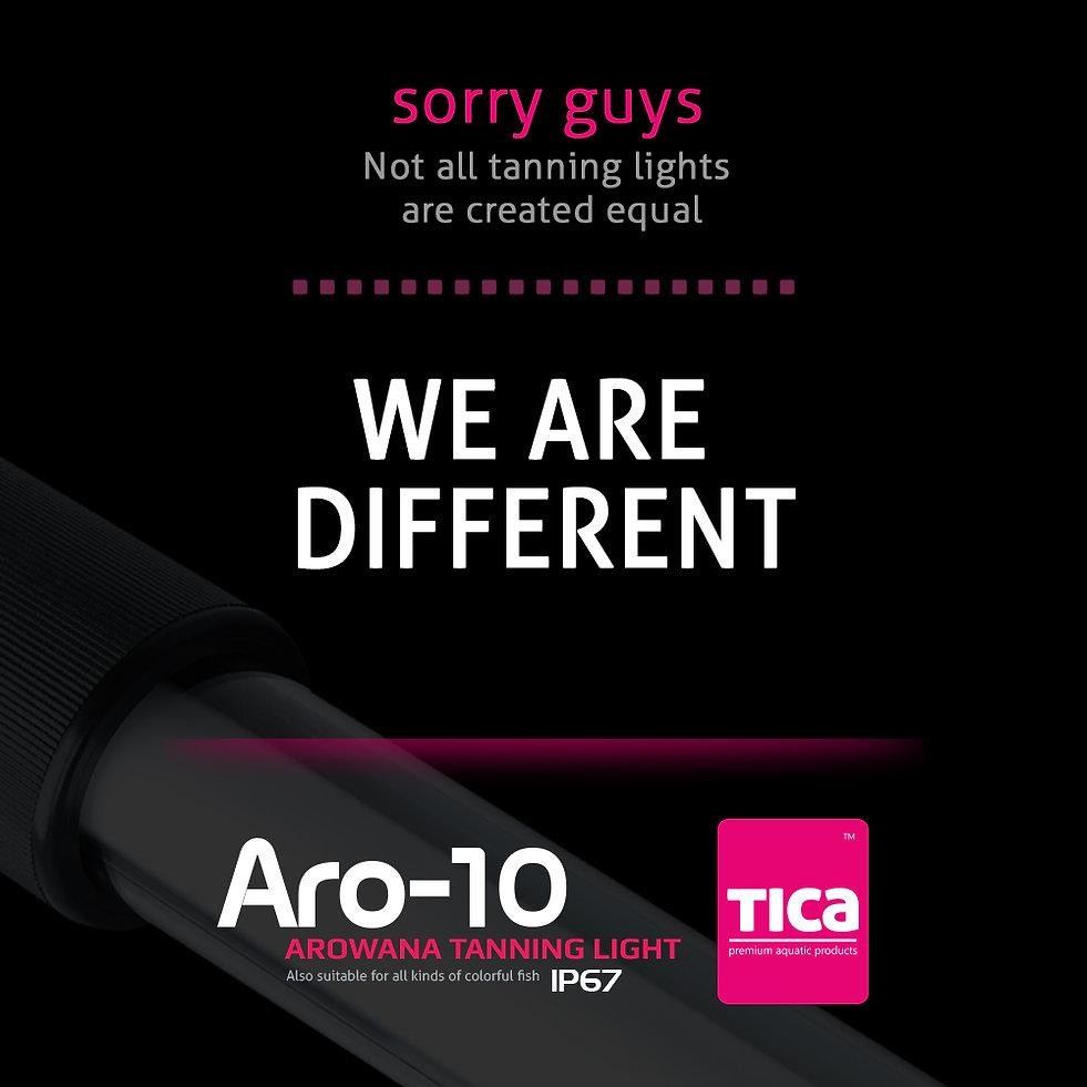 Aro-10_6_watermark_1000x1000_1.jpg