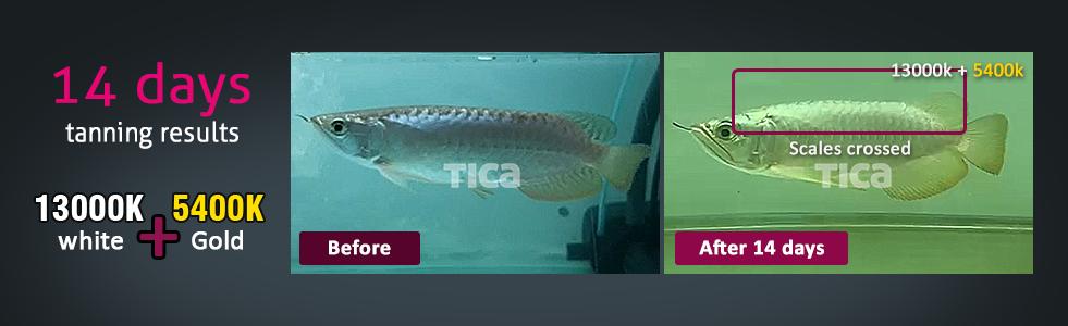 tica aquarium light