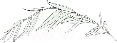Willow_Logo_White_v1.png