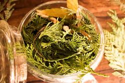 6 Week Herbal Medicine Course