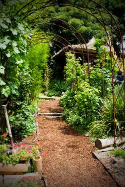 Ornamental Edible Gardens