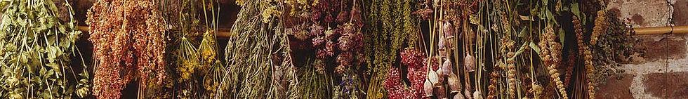 Herbs_photo.jpg
