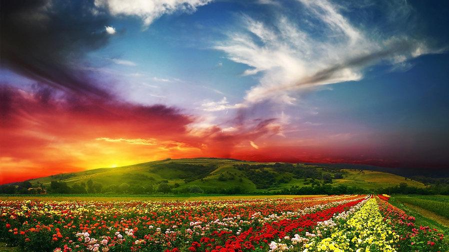 50-506247_2k-beautiful-view-of-flowers.j