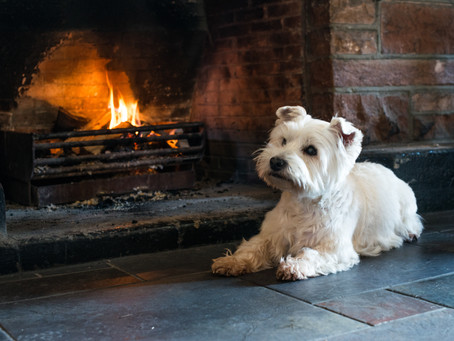 Vote for The Red Lion: Most Dog-friendly Accommodation