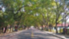 中興新村街景.jpg