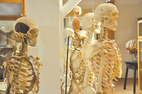 Skelette.jpg