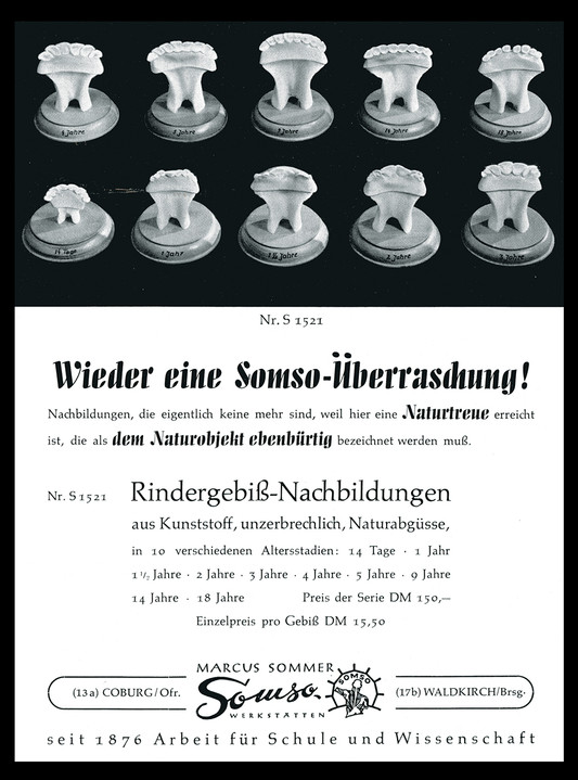 katalog_rindergebiss.jpg