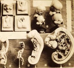 embryo023.jpg