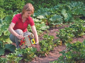 Gartentipps für leckere Früchte