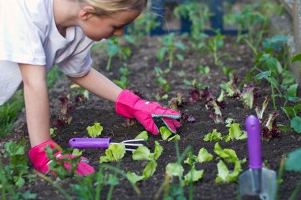 GardenVolunteers.jpg