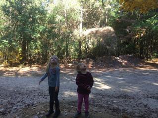 Tadpoles: Week Six - Fallings Leaves and Climbing Trees