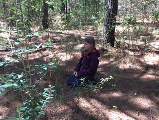 Gray Squirrels 2017-2018 : Week 22 - Pine Needle Oil