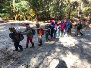 Gray Squirrels: Week Six - Blindfold Caterpillar and Swamp Explorations