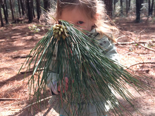 Bobcats and Tadpoles Spring 2018: Week 8 - Pine Needle Oil