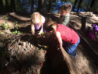 Tadpoles 2017-18: Week 1 - Fairy Houses & Climbing Trees