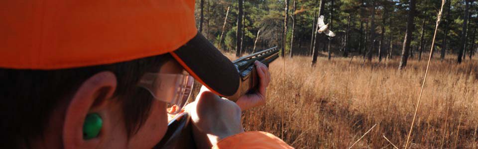 Quail hunt with us!