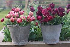 tulip buckets.JPG