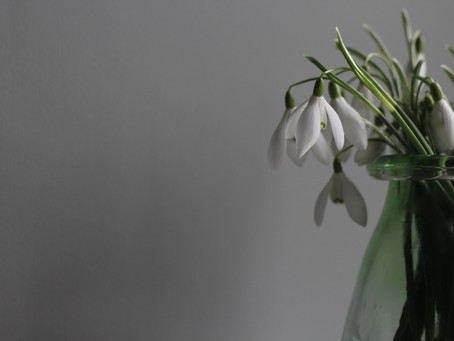 Snowdrops - fun facts and countryside walks