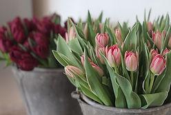 Tulip close up.JPG
