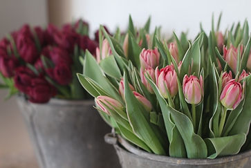 Flower shop Salisbury