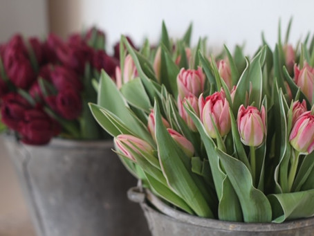 Why do tulips droop?